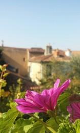 flower_automne1